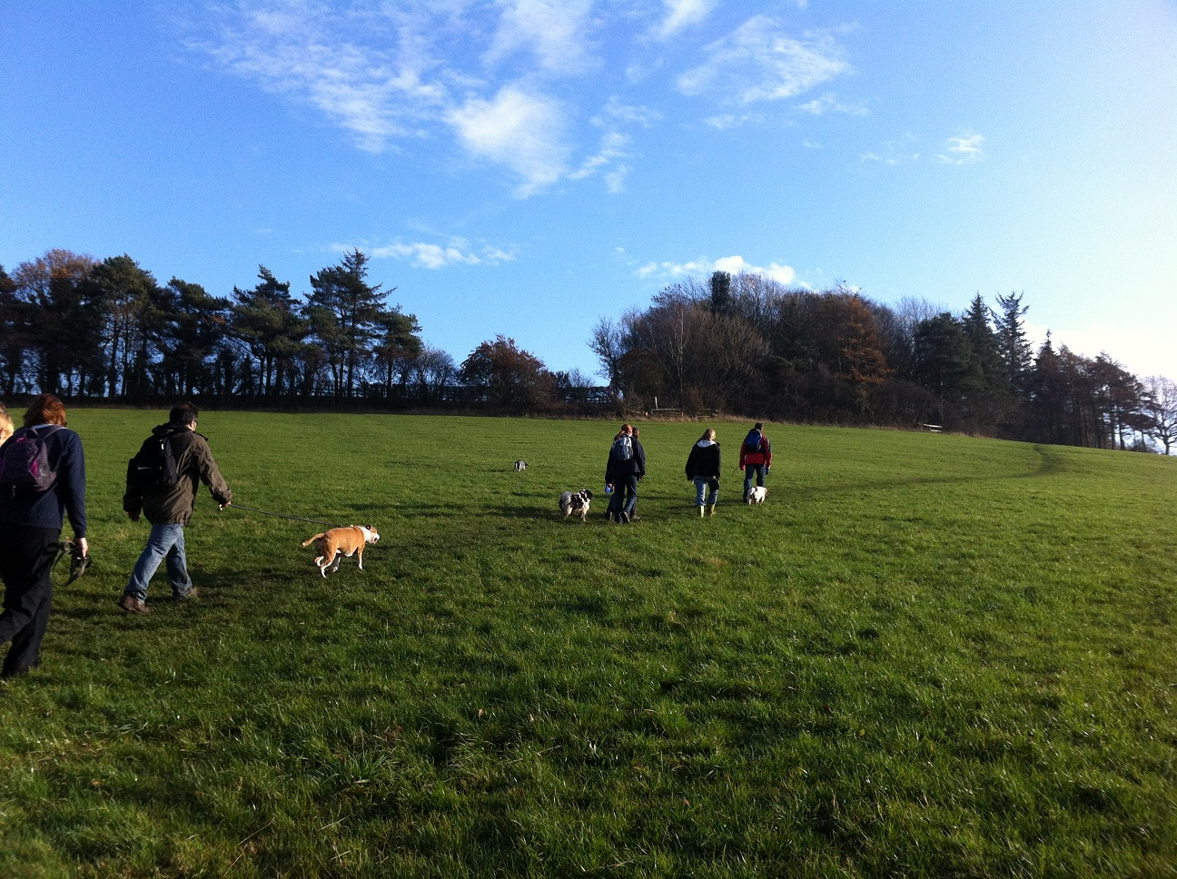 Sheffield Dog Walking Group